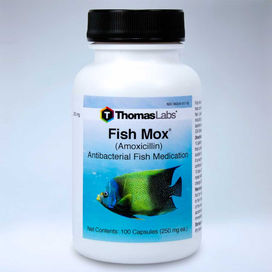 Fish mox amoxicillin 250mg 100 ct for Fish mox forte